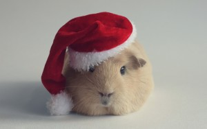 Hamster Wallpaper Animals High Quality