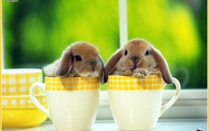 Rabbit Wallpaper In Cup