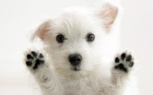 Cute Dog Wallpaper Android