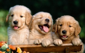 Dog Cute Wallpaper Image Picture